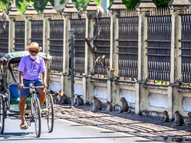Tailandia realiza esterilización masiva en monos tras alarmante invasión