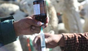Puno: Minagri protegerá más de 507,000 cabezas de ganado con kits veterinarios