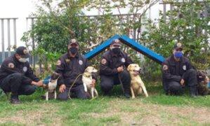 Surco: Brigada Canina pone en adopción a perros rescatados durante cuarentena