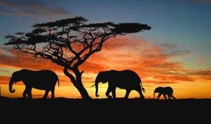 Repentina muerte de al menos 275 elefantes en Botsuana preocupa al mundo