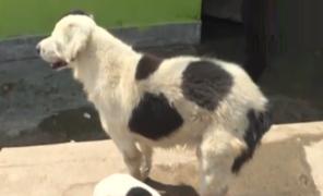 Más de 100 mascotas en riesgo ante inminente desalojo de albergue