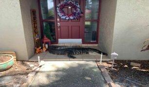 EE.UU: familia encontró caimán de casi 3 metros en la puerta de su casa