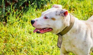 Lince: serenos fueron atacados por perro pitbull durante intervención en parque