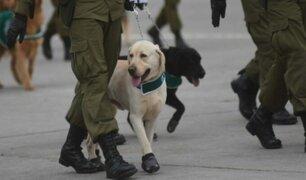 Carabineros de Chile entrenan a perros para detectar a la COVID-19