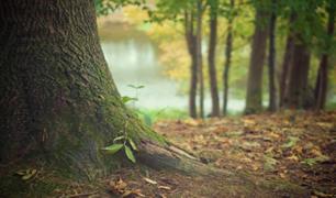 Pucallpa: empresa plantó 600 mil árboles de diferentes especies nativas