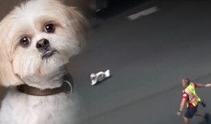 EEUU: policía persiguen durante 8 minutos a un perro por una carretera para ponerlo a salvo