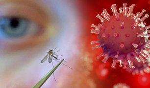Investigación ratifica que los mosquitos no transmiten la COVID-19