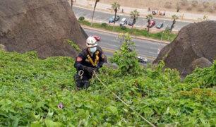 Costa Verde: tras varios minutos de tensión rescatan a mujer que cayó a acantilado