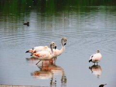 MML inicia preventa de entradas para visitar los Pantanos de Villa