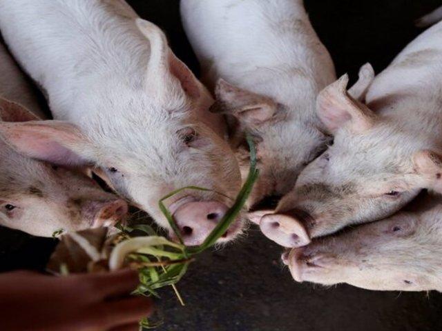 SMP: vivienda estaría siendo utilizada para guardar restos de comida para alimentar a cerdos