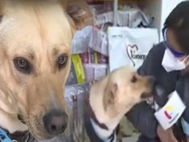 "Un can llamado ""Firulais"": esta es la historia del guardián del Almenara"