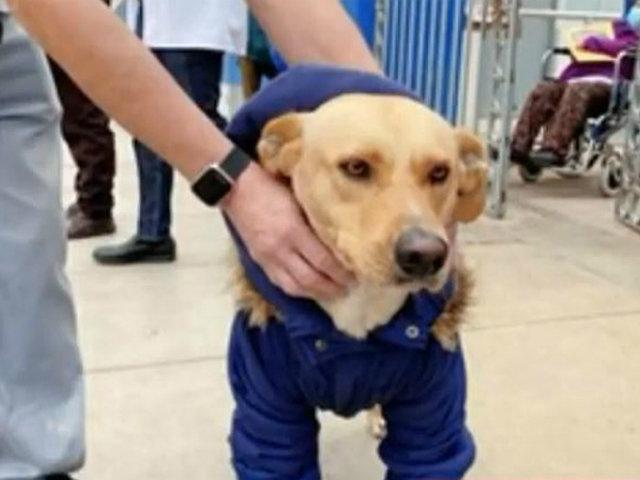 'Piruco' era en realidad 'Lucky': tierno perrito por fin encontró a sus dueños