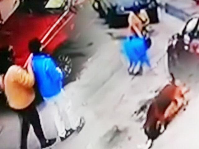 Comas: mujer que enveneno a perro señaló que el animal atacó a su hijo