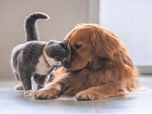 Conocida empresa lanzó el primer seguro para mascotas en el país