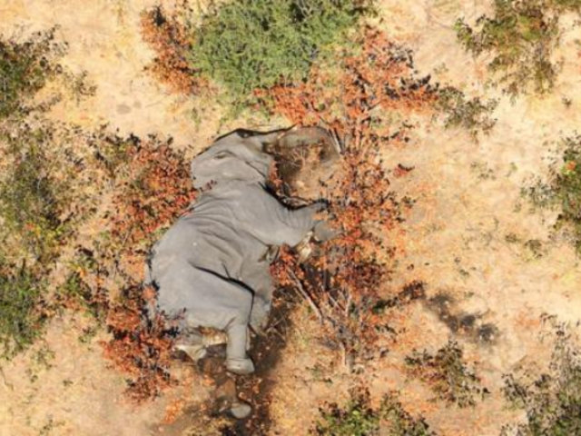 Investigadores temen que misteriosa muerte de elefantes en Botsuana podría ser causada por un nuevo virus