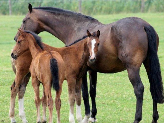 Argentina: suero de caballos podría ser clave en una cura contra el COVID-19