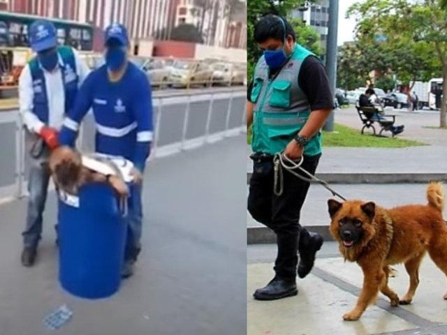 Perro que fue encerrado en balde por trabajadores del Metropolitano es hallado y ahora busca un hogar