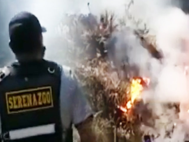 Áncash: incendio forestal arrasa siete hectáreas de bosques de eucaliptos