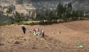 Áncash: agricultores cambian costumbres de cosecha por pandemia de coronavirus