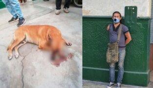 Cercado de Lima: sujeto ataca con arma punzocortante a perro y le desfigura el rostro