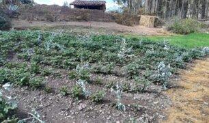 Áncash: heladas perjudican a agricultores de Huari