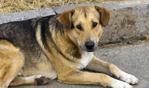 Arequipa: sujeto presuntamente ebrio acuchilló a perro