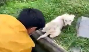 Huaral: obrero rescata a perro que cayó en buzón