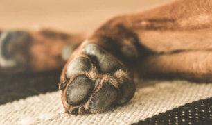 Cercado de Lima: niños fueron captados robando  a un perro