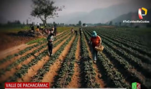 Valle de Pachacámac: Agricultores pierden sus cosechas por la pandemia del Covid-19