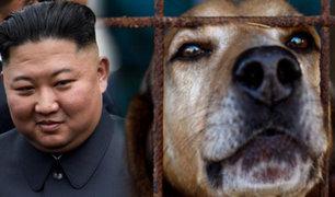 Corea del Norte: Kim Jong-un prohíbe los perros como mascotas