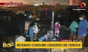Chorrillos: incendio consumió criadero de cerdos