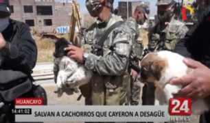 Huancayo: Perritos que cayeron a buzón de desagüe fueron rescatados por serenazgos