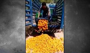 Junín: agricultor arrojó sus naranjas a la carretera por bajos precios y falta de venta