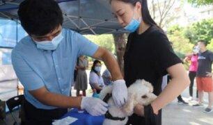 Disponen que todos los perros tengan microchip en ciudad china