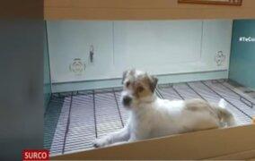 Surco: Intervienen tienda de mascotas en el Jockey Plaza tras denuncia de maltrato animal