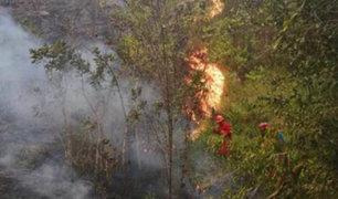 Incendio forestal arrasó 30 hectáreas de bosque en la región San Martín