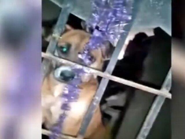 Sin agua, sin alimentos y encerrados: Así es la situación en la que viven dos perros en Surquillo