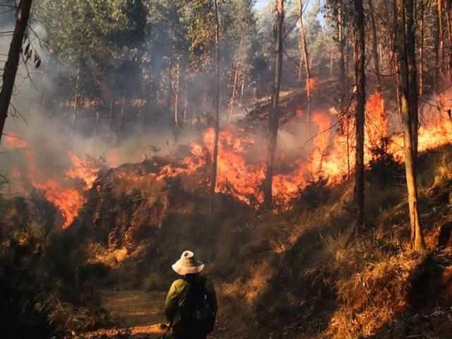 Cusco: incendio forestal deja 8 muertos y más de 30 heridos