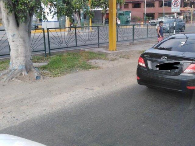 Av. Benavides: obras de remodelación dejaron árboles en plena pista