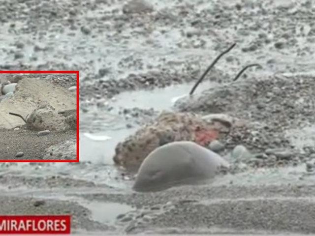 Miraflores: peligroso desmonte en playa Los Delfines