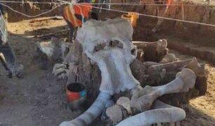 México: descubren restos de al menos 60 mamuts en construcción de nuevo aeropuerto en CDMX
