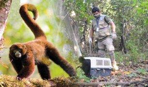 Pucallpa: rescatan animales silvestres que estaban en cautiverio y eran comercializados