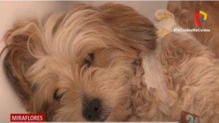 Miraflores: hombre acusado de ser un violento vecino denuncia que acuchillaron a su perro