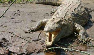 Cocodrilo mordió en la cabeza a hombre mientras buceaba en Australia