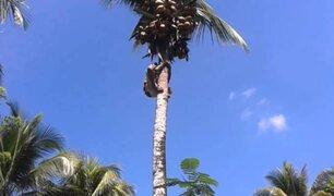 ¡Impactante! EE.UU: hombre es catapultado luego de trepar palmera para podarla