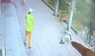 Hombre terminó noqueado tras caerle un gato en la cabeza cuando paseaba a su perro