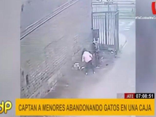 Ate: menores abandonaron a seis gatos en Av. La Molina