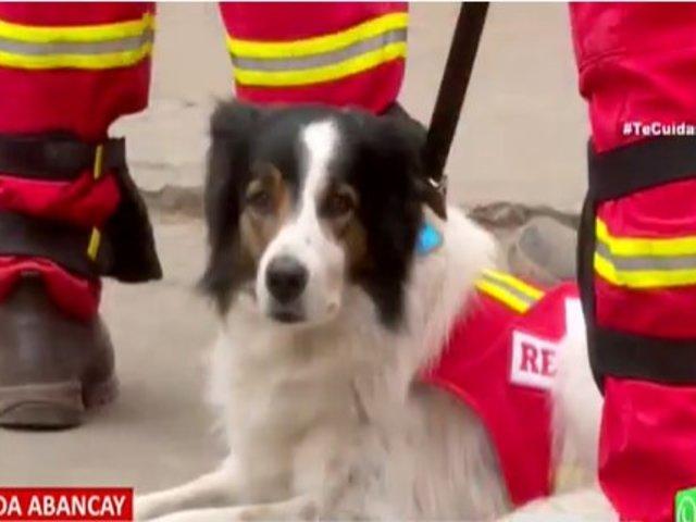 'Bono', el perro rescatista que busca a obrero entre escombros