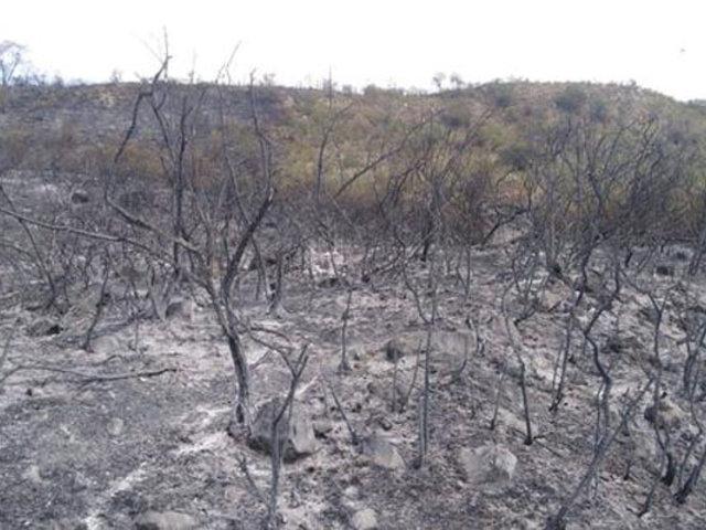 Tras dos días de intenso trabajo logran extinguir incendio forestal en Áncash