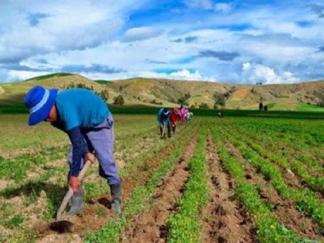 Perú destinó más de S/ 4000 millones para reactivar el agro